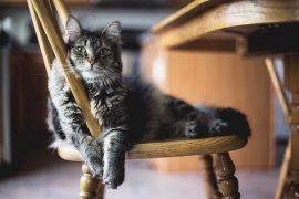 chat allongé sur une chaise en bois